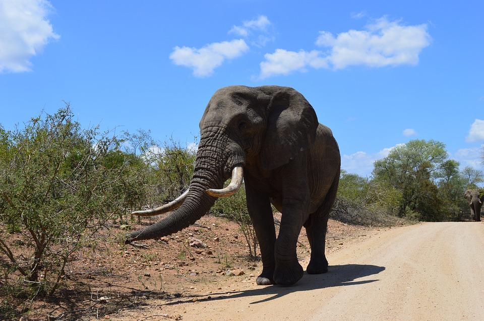 viaggio gratis in Sudafrica