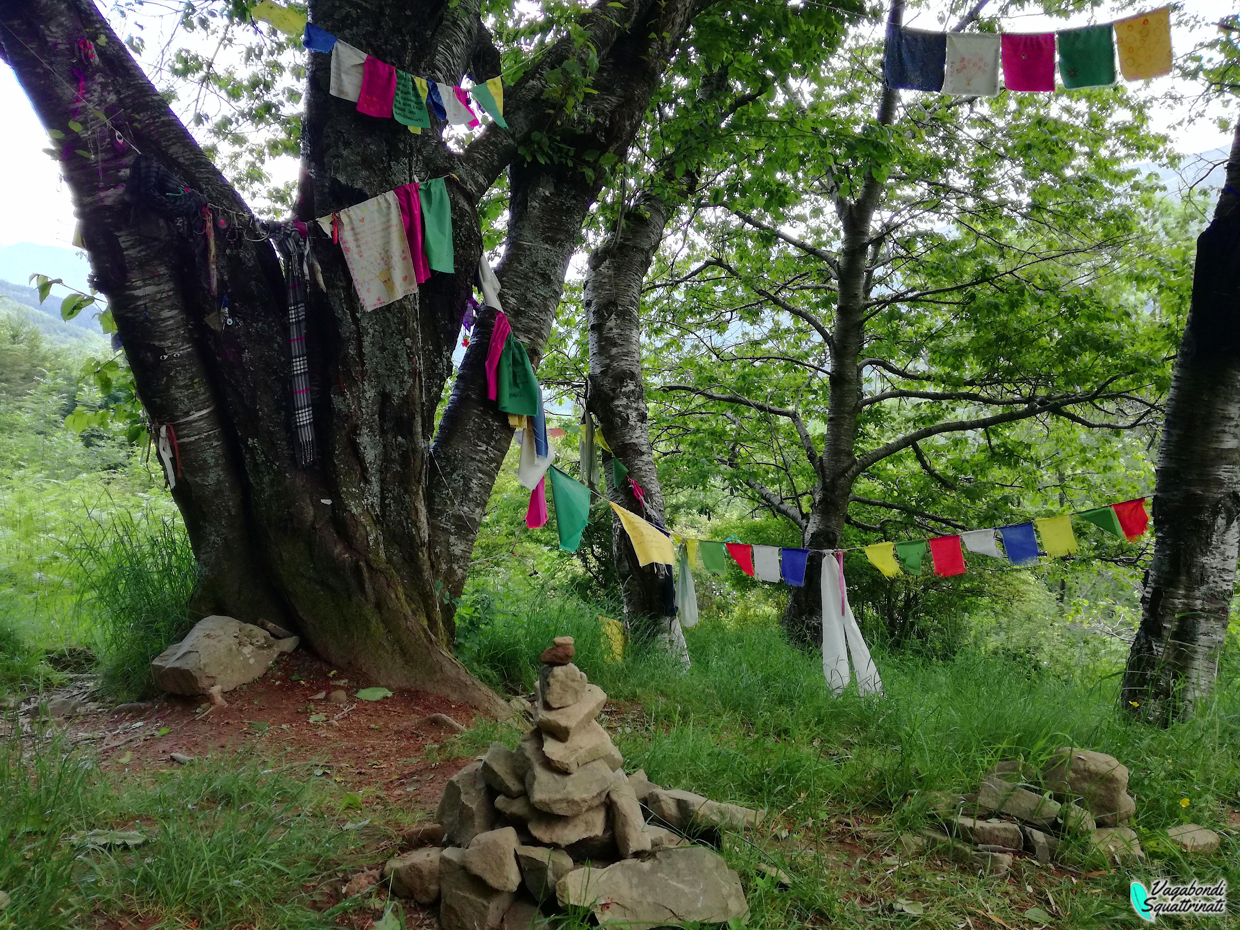 L'albero con gli Occhi a Orsigna