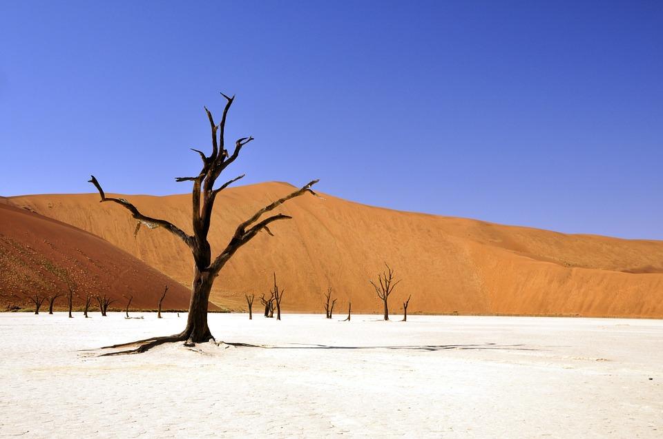 vincere un viaggio con safari in Namibia