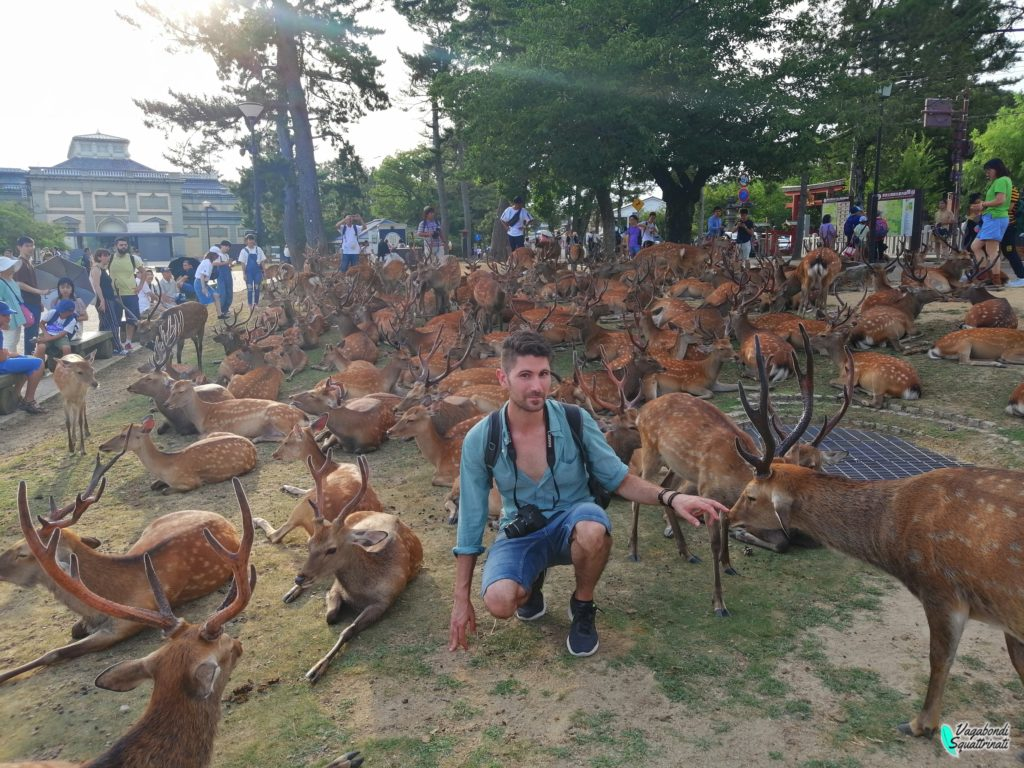 nostro viaggio a Kyoto matteo e i cervi vagabondi squattrinati