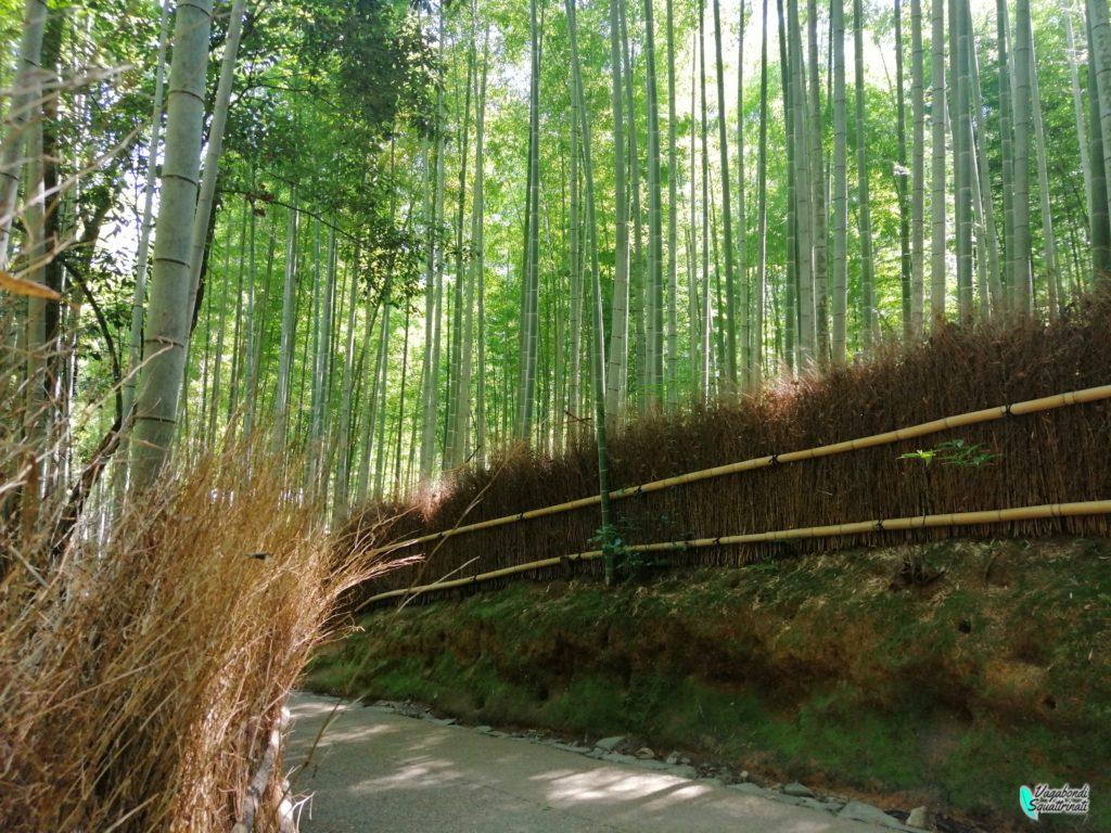 foresta di bambù arashiyama nostro viaggio a Kyoto