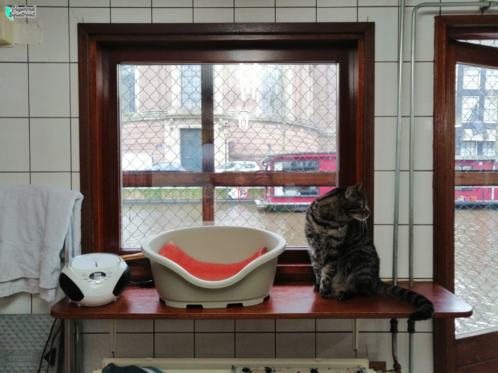 de poezenboot barca dei gatti viaggio amsterdam