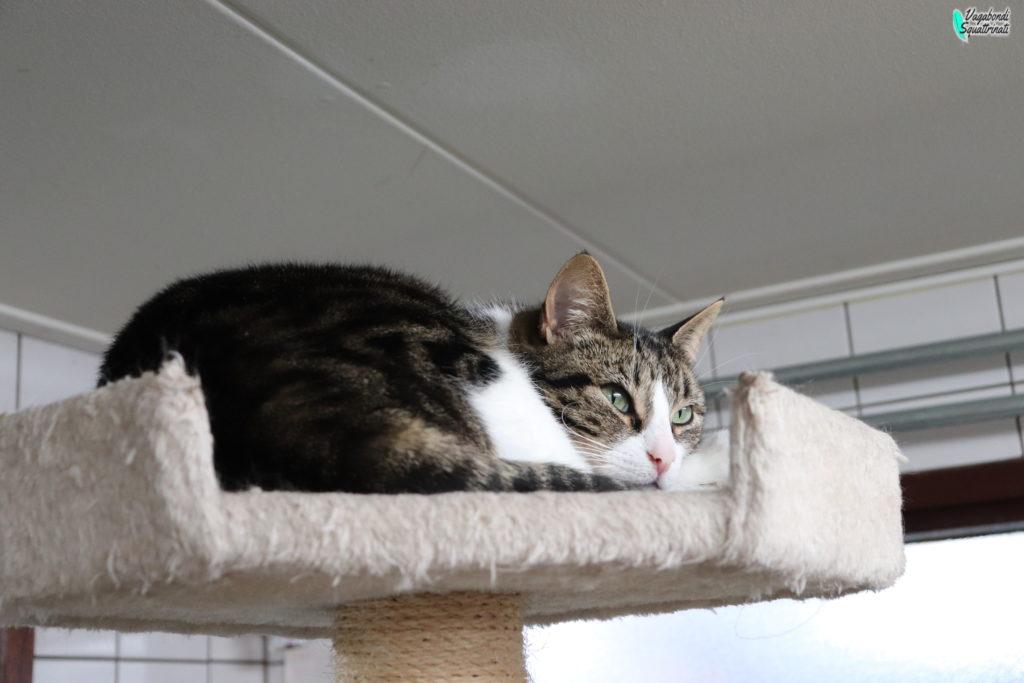 barca dei gatti amsterdam