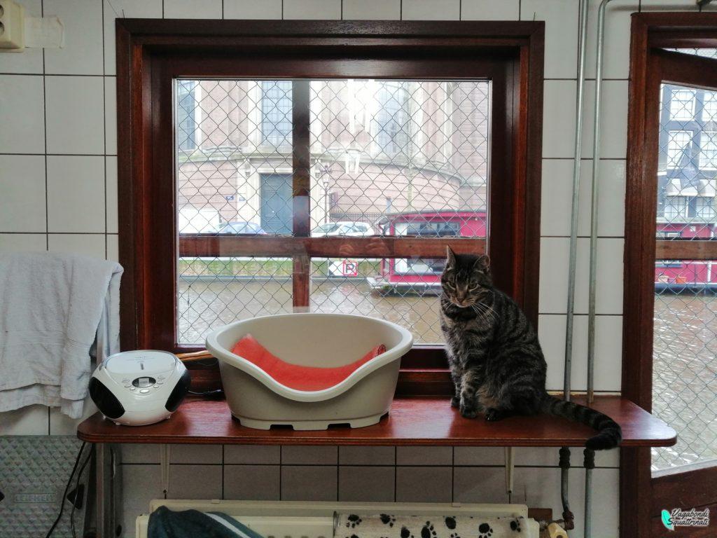 De Poezenboot: la barca dei gatti ad Amsterdam
