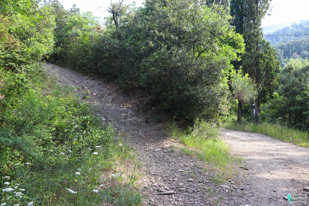 sentiero della volpe montale