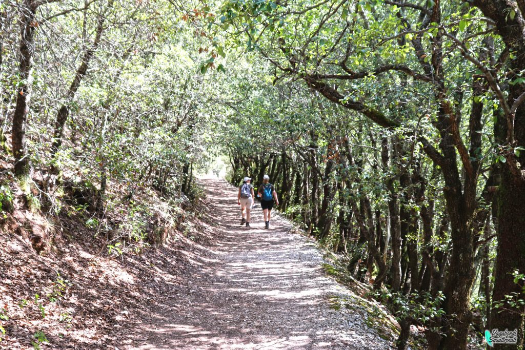 sentiero bosco percorso